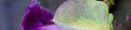 lynne-garden-flower-header.png