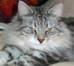 My Lovely Boy Cat